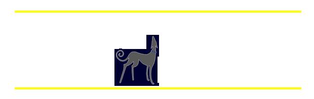 Bluedog Solutions
